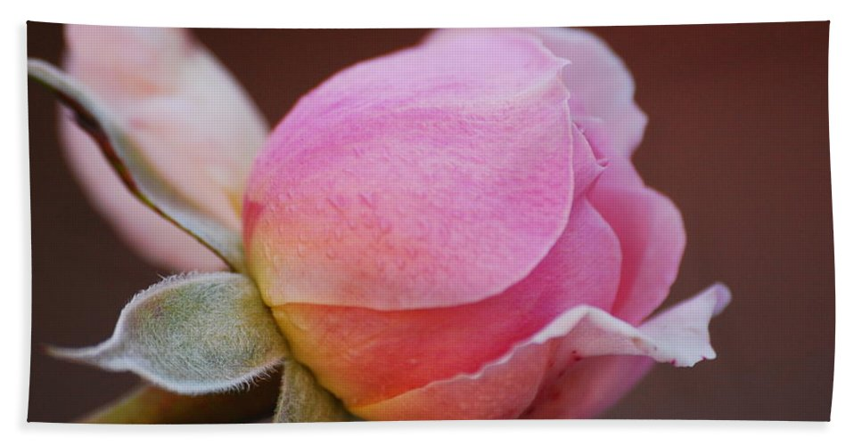 Rose Hand Towel featuring the photograph Here I Come by Lori Tambakis