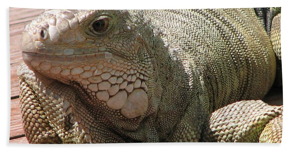 Iguana Bath Sheet featuring the photograph Here Leezard Leezard by Stacey May