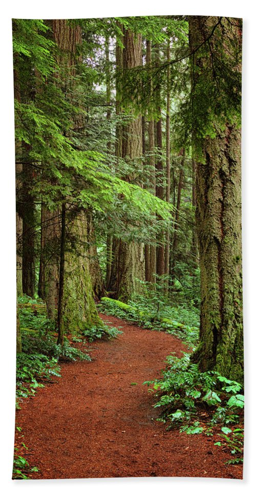 Forest Hand Towel featuring the photograph Heritage Forest 2 by Randy Hall