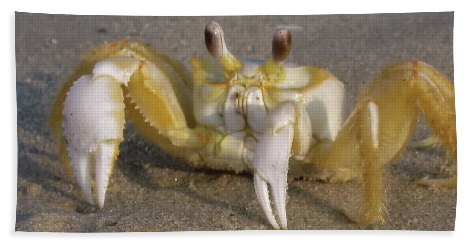 Hermit Bath Sheet featuring the photograph Hermit Crab by JAMART Photography