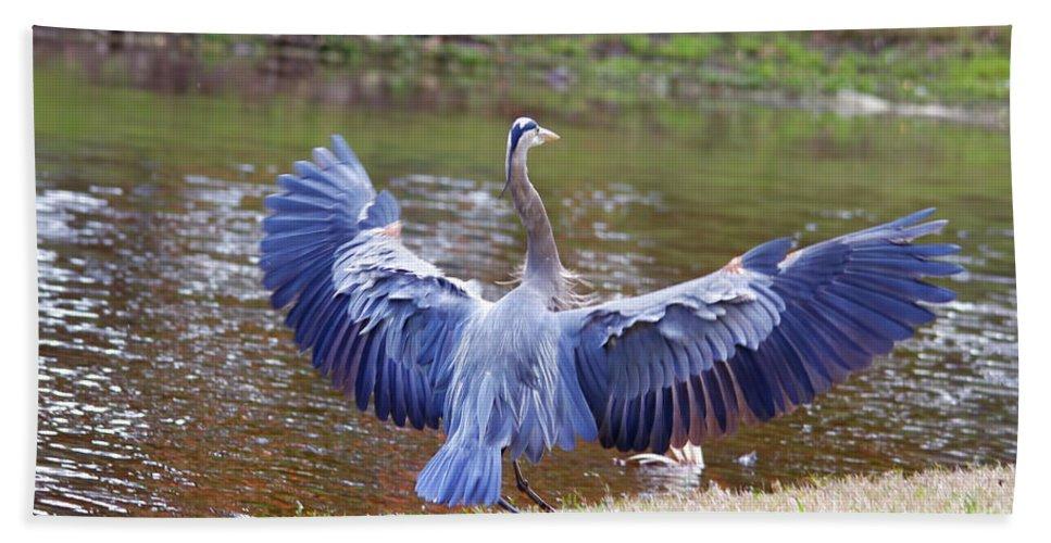 Blue Heron Hand Towel featuring the photograph Heron Bank Landing by Deborah Benoit