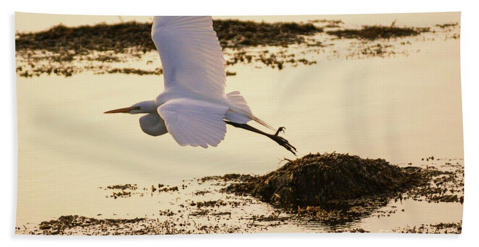 Animal Bath Sheet featuring the photograph Heron Fly-by by Joe Geraci