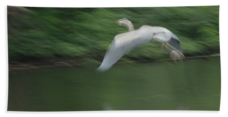 Great Blue Heron Hand Towel featuring the photograph Heron Glide by Karol Livote