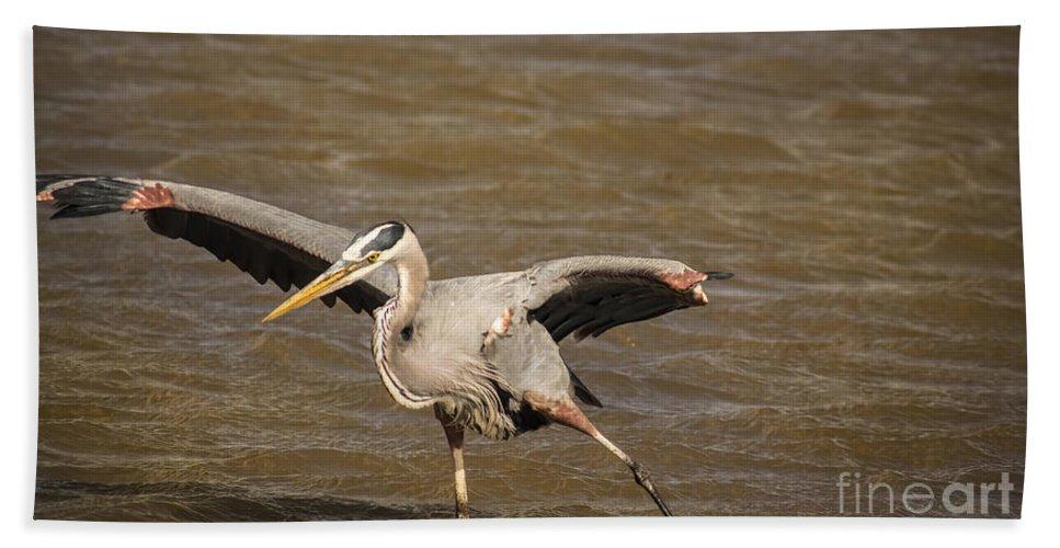 Wildlife Bath Sheet featuring the photograph Heron - Hokey Pokey by Robert Frederick