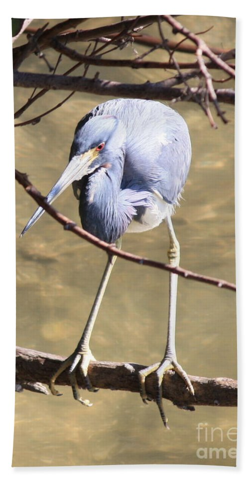 Tricolored Heron Hand Towel featuring the photograph Heron On Branch by Carol Groenen