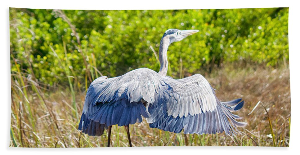 Everglades Bath Sheet featuring the photograph Heron On The Rise by Judy Kay