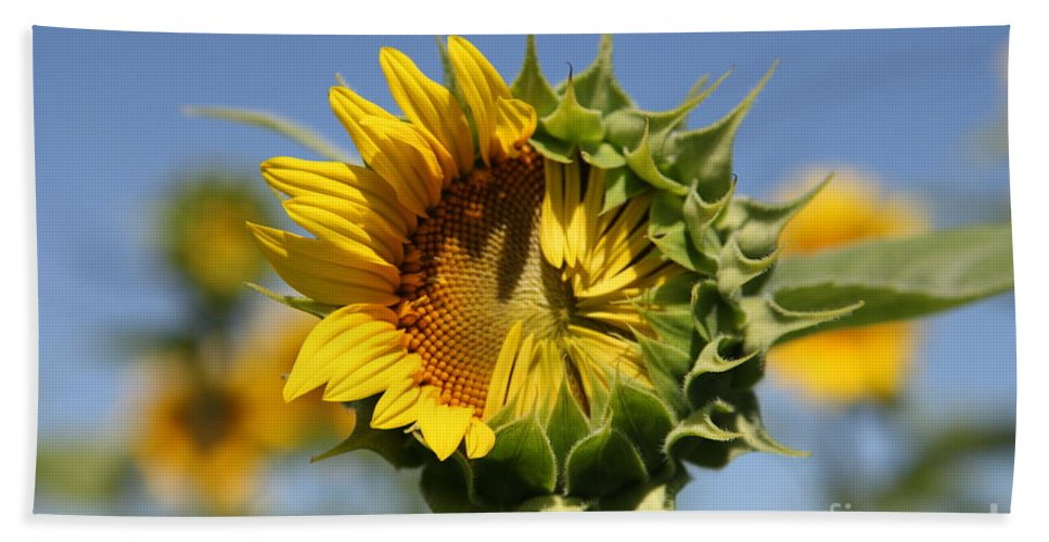 Sunflowers Bath Towel featuring the photograph Hesitant by Amanda Barcon