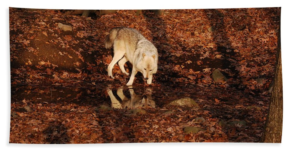Wolf Hand Towel featuring the photograph Hey You Look Just Like Me by Lori Tambakis