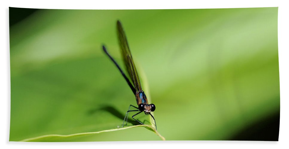 Damselfly Hand Towel featuring the photograph Hey You.. by Nina Stavlund
