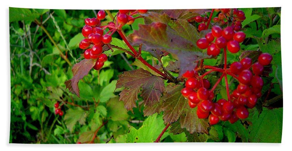 Hi Bush Cranberries Berries Hand Towel featuring the photograph Hi Bush Cranberry Close Up by Joanne Smoley