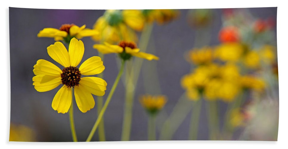 Flower Hand Towel featuring the photograph Hi, My Name Is Daisy... by David Ross