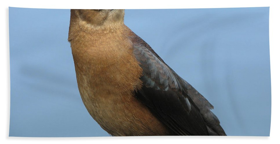Bird Hand Towel featuring the photograph Hi There by Stacey May