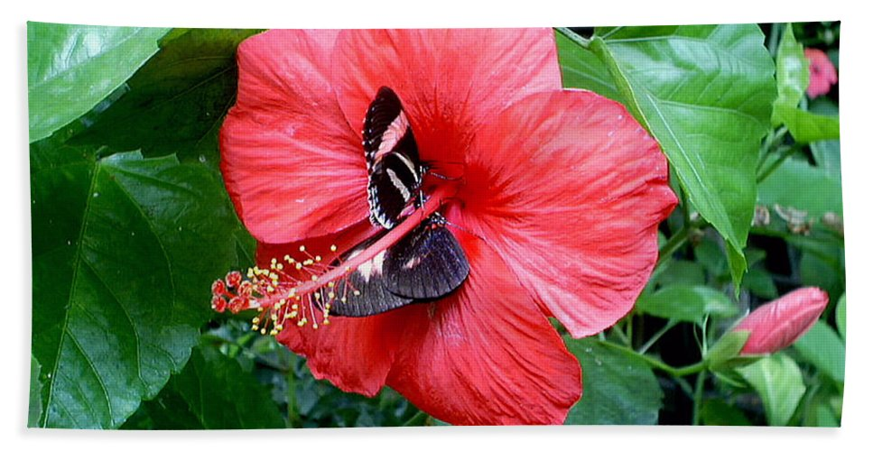 Flora Bath Sheet featuring the photograph Hibiscus And Butterfly Diners by Susan Baker
