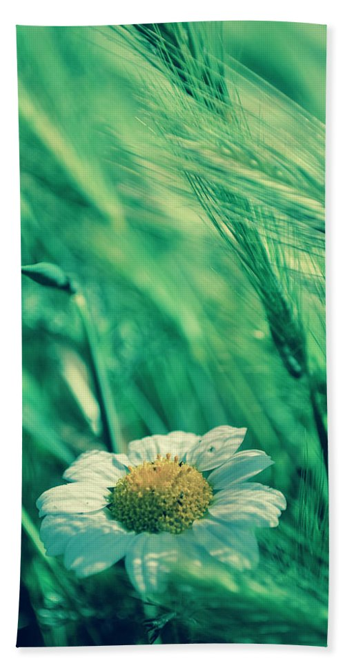 Daisies Bath Sheet featuring the photograph Hidden by Ignacio Leal Orozco