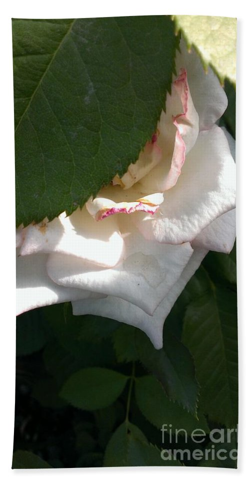 Rose Hand Towel featuring the photograph Hidden Rose by LKB Art and Photography