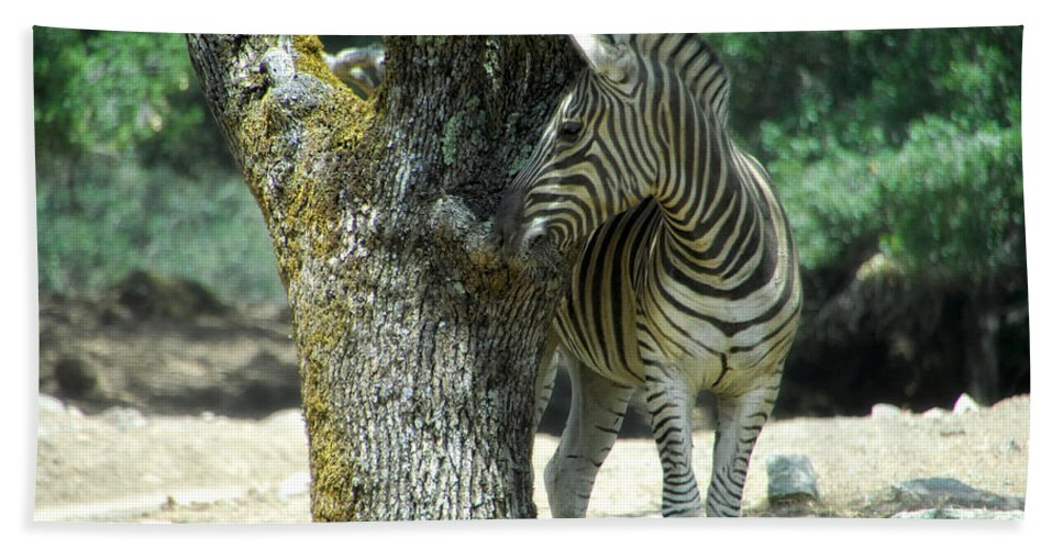 Zebra Bath Sheet featuring the photograph Hide And Seek by Donna Blackhall