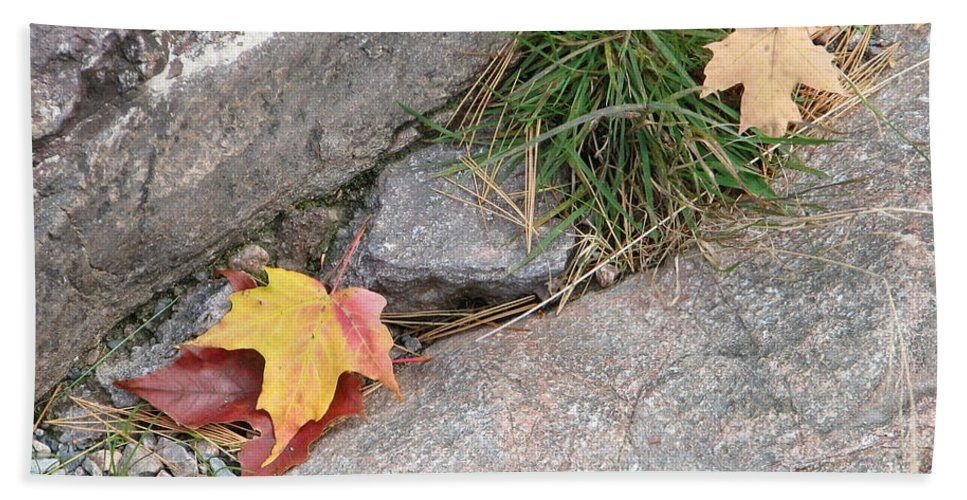 Fall Hand Towel featuring the photograph Hiding by Kelly Mezzapelle