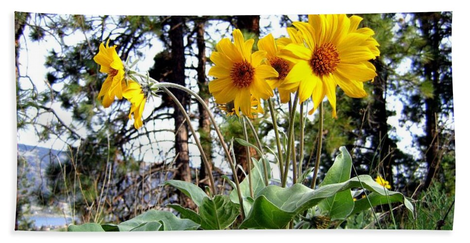 Sunflowers Hand Towel featuring the photograph High In The Hills by Will Borden