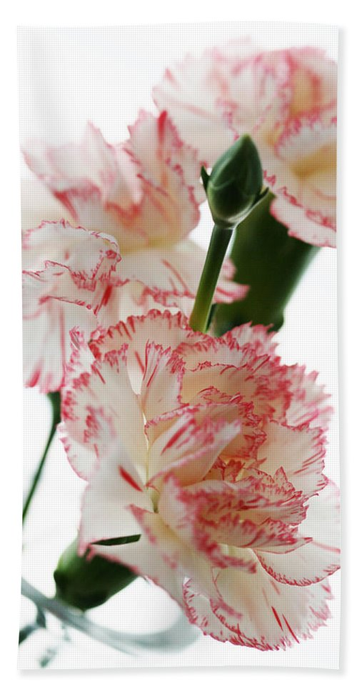 High Bath Sheet featuring the photograph High Key Pink And White Carnation Floral by Kathy Clark