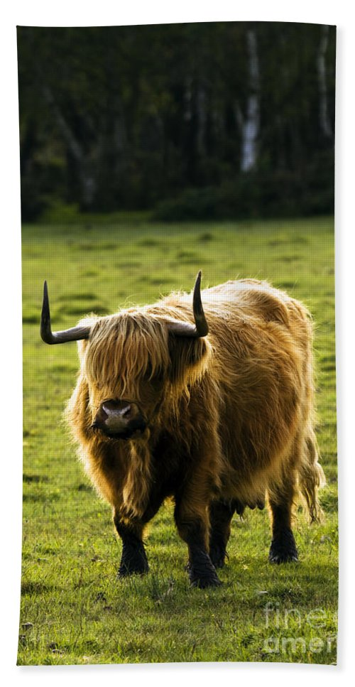 Heilan Coo Hand Towel featuring the photograph Highland Cattle by Angel Tarantella