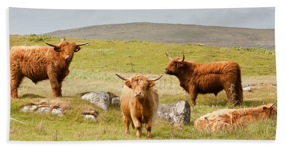 Scotland Bath Sheet featuring the photograph Highland Cattle by Colette Panaioti