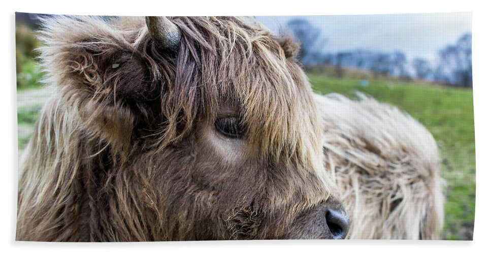 Agriculture Hand Towel featuring the digital art Highland Cow by Gary Ellis