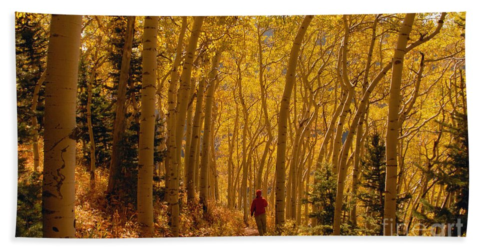 Fall Hand Towel featuring the photograph Hiking In Fall Aspens by David Lee Thompson