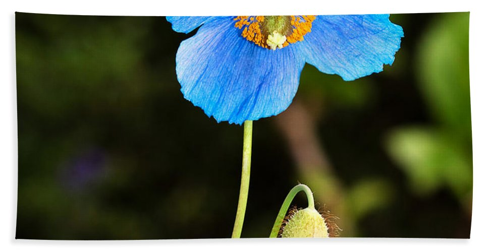Flower Bath Sheet featuring the photograph Himalayan Blue Poppy by Louise Heusinkveld