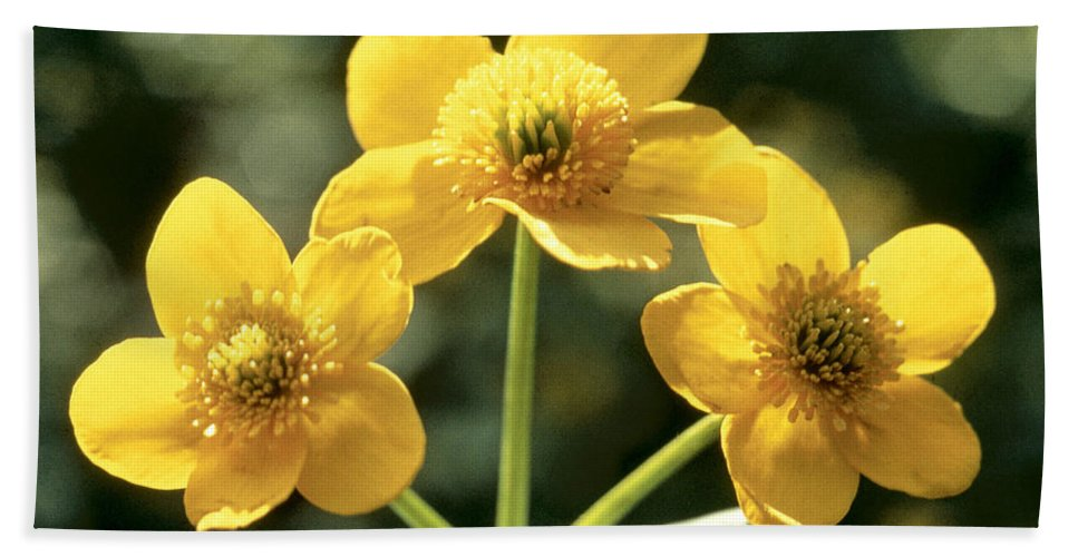 Flower Hand Towel featuring the photograph Himalayan Marsh Marigold by American School