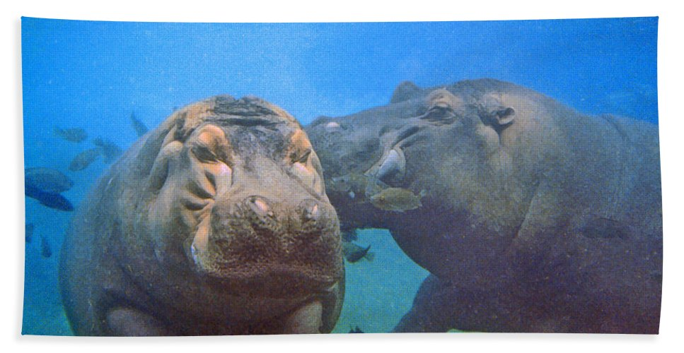 Animals Hand Towel featuring the photograph Hippos In Love by Steve Karol