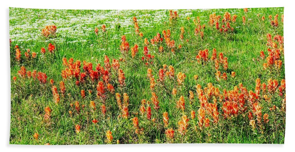 Indian Paintbrush Hand Towel featuring the photograph History Of The Paintbrush by Gary Richards