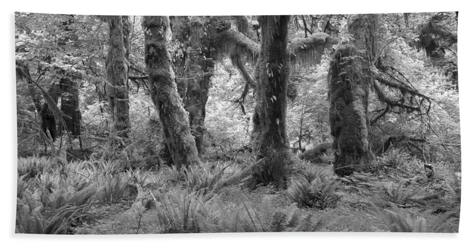Hoh Bath Sheet featuring the photograph Hoh Rain Forest 3371 by Bob Neiman