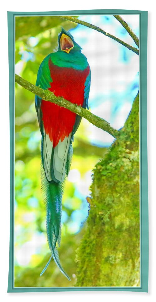 Resplendent Quetzal Hand Towel featuring the photograph Hola by BYETPhotography