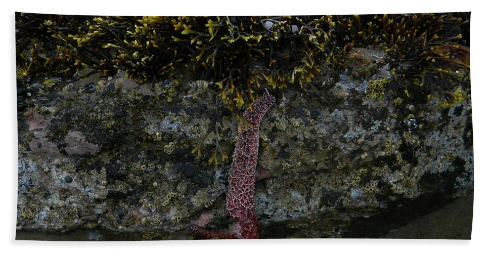 Starfish Hand Towel featuring the photograph Hold On by Gallery Of Hope
