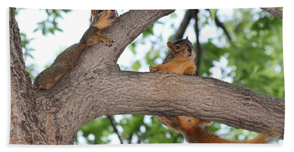 Squirrel Bath Sheet featuring the photograph Hold On by Lori Tordsen