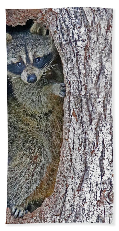 Raccoon Hand Towel featuring the photograph Holed Up by Steve Gass