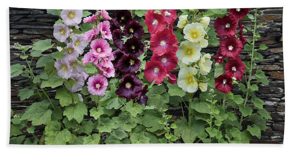 Vp Hand Towel featuring the photograph Hollyhock Alcea Rosea Flowers by VisionsPictures