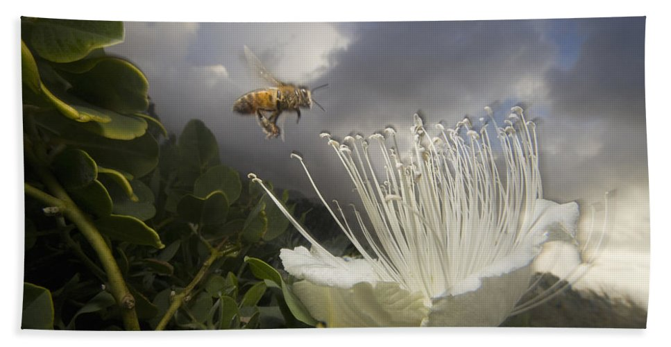 Mp Hand Towel featuring the photograph Honey Bee Apis Mellifera Approaching by Mark Moffett