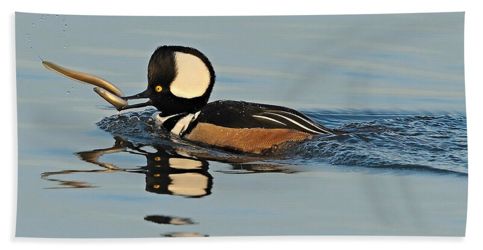 Merganser Hand Towel featuring the photograph Hooded Merganser And Eel by William Jobes