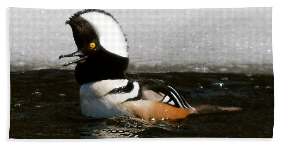 Hooded Merganser Duck Spring Bird River Nature Hand Towel featuring the photograph Hooded Merganser Maine by Sheila Price