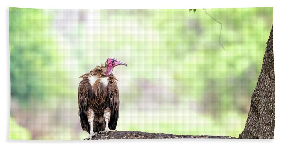 Vulture Hand Towel featuring the photograph Hooded Vulture by Jane Rix