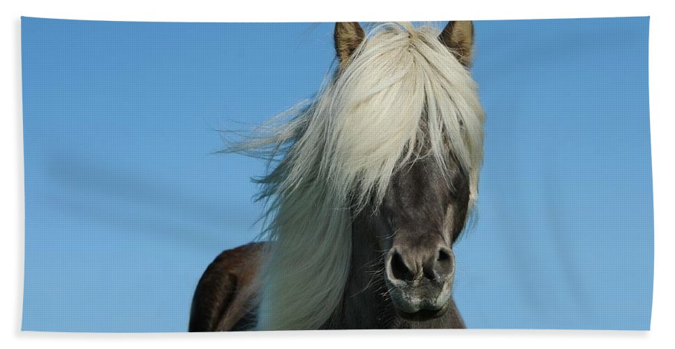 Horse Bath Sheet featuring the photograph Horse And Blue Sky by FL collection