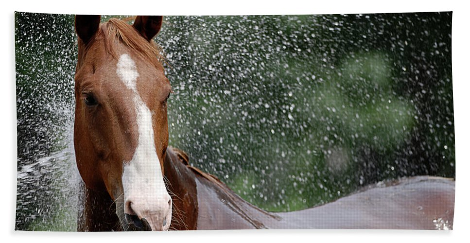 Horse Hand Towel featuring the photograph Horse Bath I by Julie Niemela