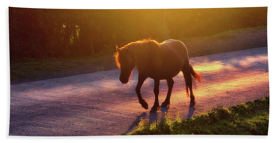 Horse Hand Towel featuring the photograph Horse Crossing The Road At Sunset by Mikel Martinez de Osaba