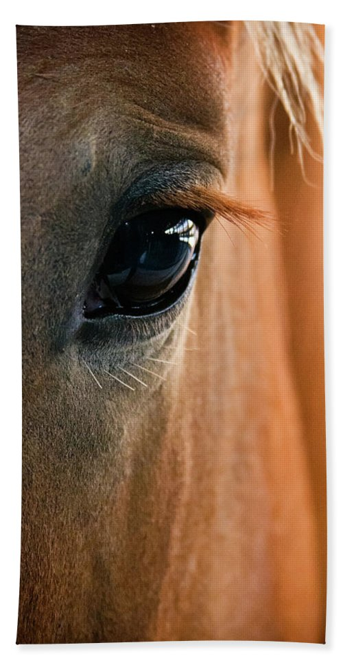 3scape Photos Bath Towel featuring the photograph Horse Eye by Adam Romanowicz