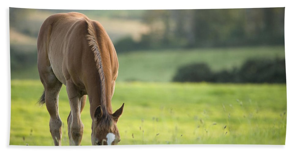 Horse Hand Towel featuring the photograph Horse In Field Near Ballyvaloo, Blackwater, Wexford by Ian Middleton