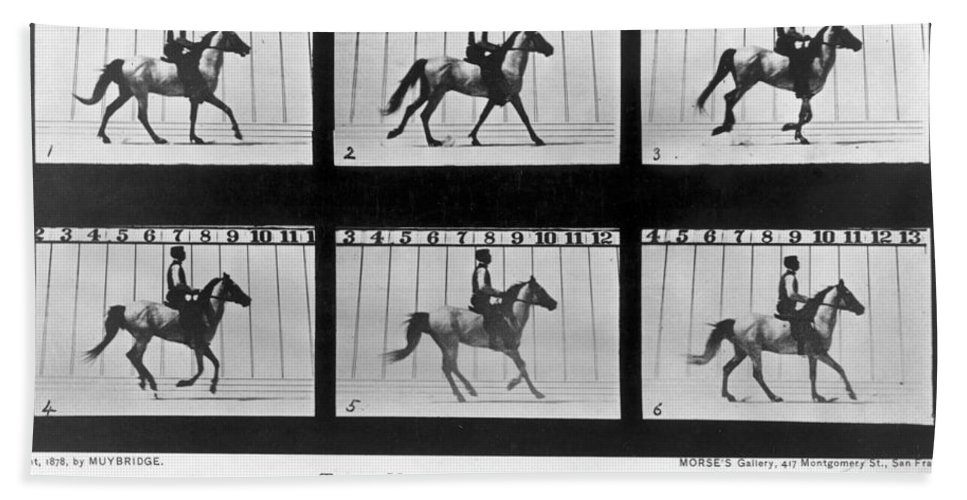 1878 Bath Sheet featuring the photograph Horse In Motion, 1878 by Granger