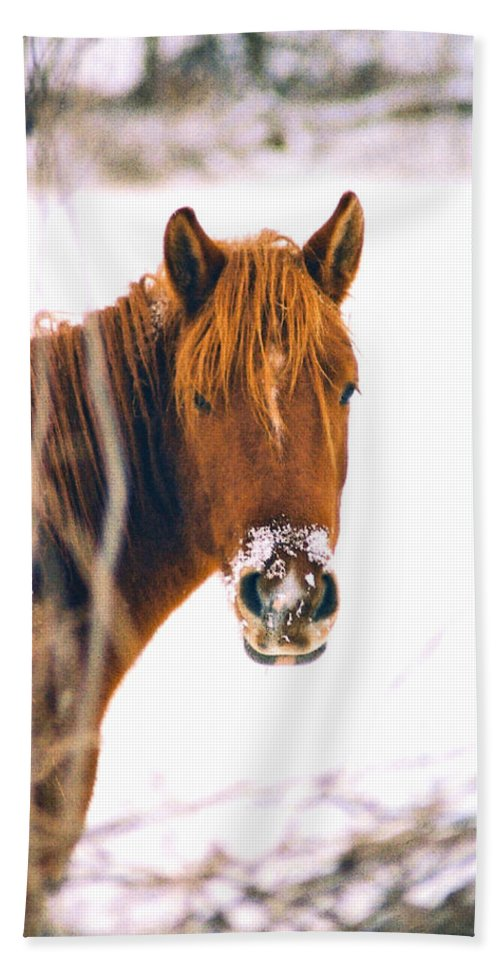 Horse Hand Towel featuring the photograph Horse In Winter by Steve Karol