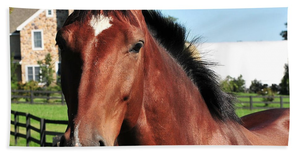 Landscape Bath Sheet featuring the photograph Horse Profile by Terri Winkler
