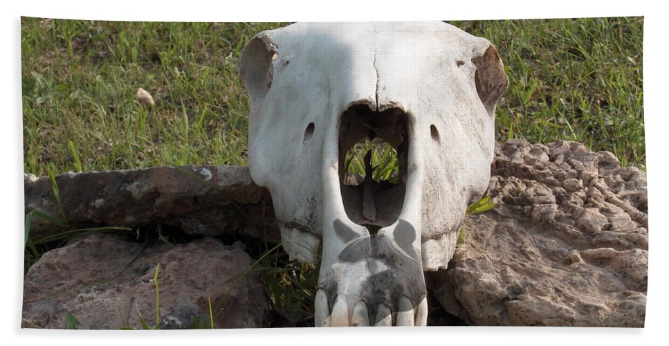 Horse Skull Spirit Friends Alone Rocks Horses Animals Ranch Herd Bath Sheet featuring the photograph Horse Spirits 2 by Andrea Lawrence